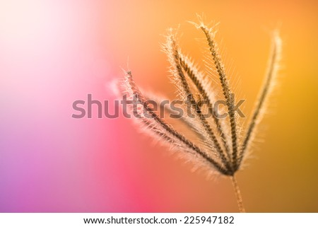 Insect on Grass flower on pastel color background,naturally refreshing - stock photo