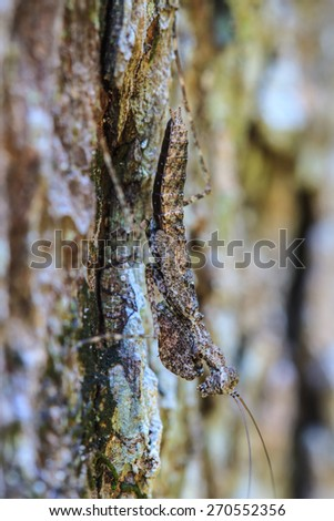 insect on leaf, Grasshopper perching on a  tree - stock photo