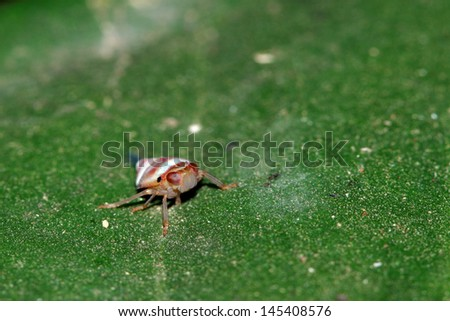 Insect on leaves - stock photo