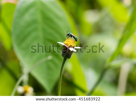 Insect on wild daisy flower nature background  - stock photo