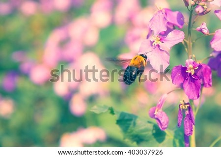 Insect pollination. Bees pollinating flowers. Spring blossom.