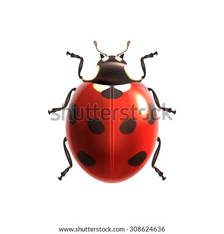 Insect realistic ladybug isolated on white background  illustration - stock photo