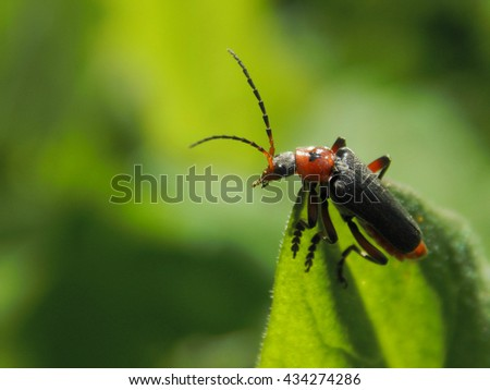 Insect sitting on a green leaf of a plant close up - stock photo