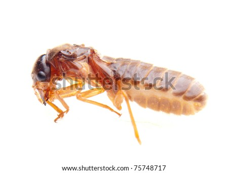 insect termite white ant - stock photo