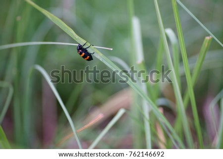 Insect with beautiful flowers