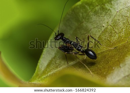 Insects in nature, Thailand. - stock photo