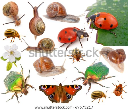 Insects isolated on white - stock photo