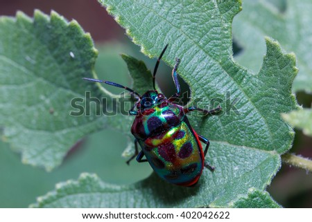 Insects,Ladybug, beetles, insects, wings, nature. - stock photo