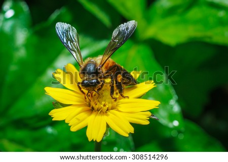 Insects - Macro insect - insect on a flower  - stock photo