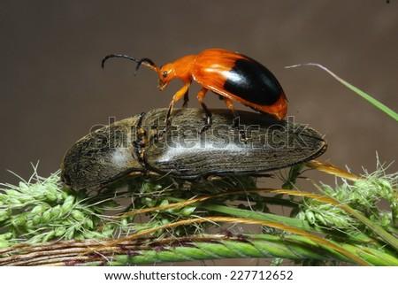 Insects orange  - stock photo