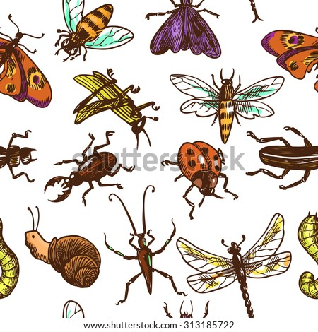 Insects sketch colored decorative seamless pattern with bug butterfly dragonfly  illustration