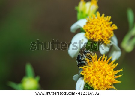 Insects with pollen, insect, flower  - stock photo