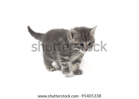 insecure kitten on white background