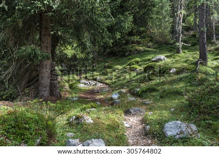 Inside a forest in the italian dolomites