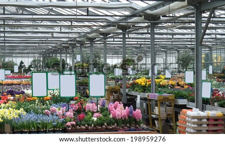 inside a greenhouse with lots of flowers - stock photo