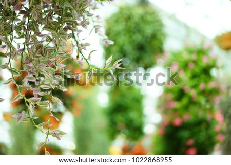 https://thumb9.shutterstock.com/display_pic_with_logo/167494286/1022868955/stock-photo-inside-garden-in-shizuoka-1022868955.jpg