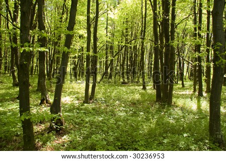 inside green forest