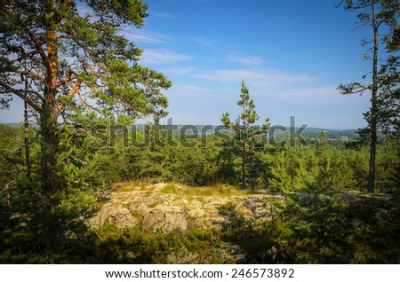 inside of the north forest - stock photo