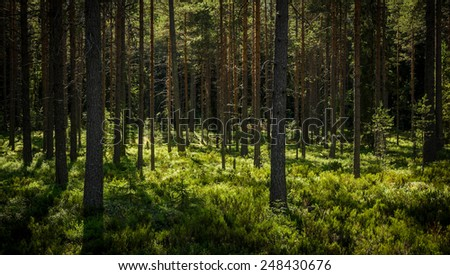 inside of the northern forest in summer - stock photo