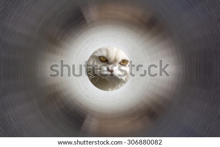 Inside the gas pipeline. White cat in the end of a tunnel - stock photo