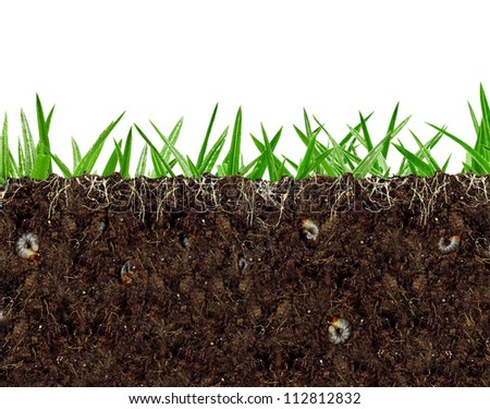 inside view of soil vital activity with roots and larvae - stock photo