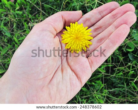 Inspirational image of a young hand holding a yellow dandelion                             - stock photo