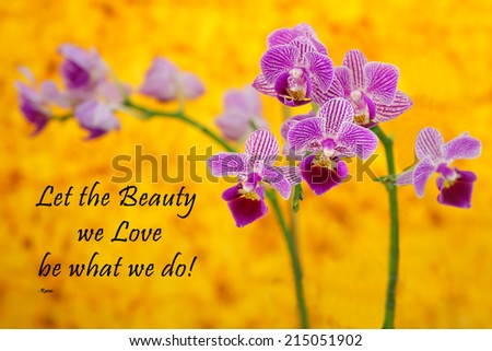 Inspirational quote about beauty and love by the Persian Poet Rumi with a beautiful purple orchid on a yellow background  - stock photo