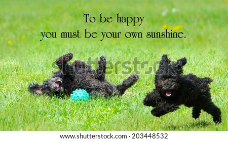 Inspirational quote about happiness by C. E. Jerningham with two adorable poodles enjoying life to the fullest. - stock photo
