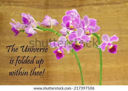 Inspirational quote about life, love, and spirituality by Baha'u'llah  with a beautiful purple orchid on a wooden background  - stock photo