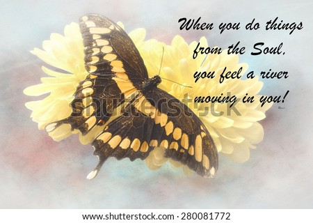 Inspirational quote about life,love, and spirituality with a beautiful Butterfly  in the background