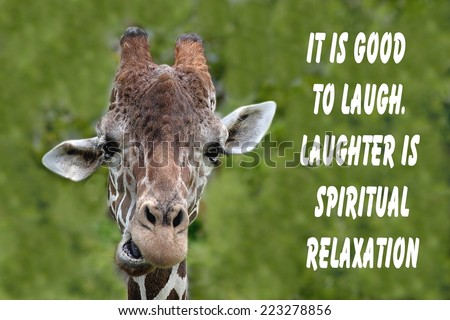Inspirational quote about love, and life with a humorous Portrait of a Giraffe - stock photo