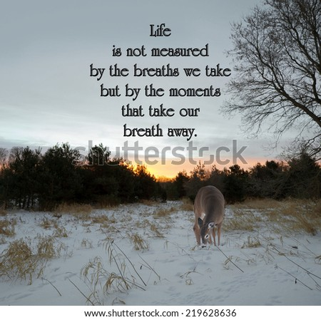 Inspirational quote on life by an unknown author with a lone doe looking for food in the meadow at sunrise in the winter. - stock photo