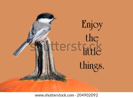 Inspirational quote on life with a sweet little chickadee perched on a pumpkin in the autumn. - stock photo