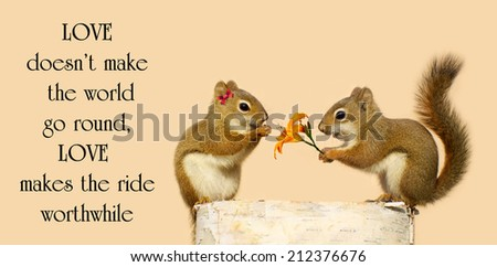 Inspirational quote on love by an unknown author with  pair of squirrels in love, the male giving his sweetheart a flower. - stock photo