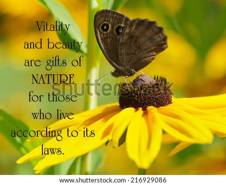 Inspirational quote on nature by Leonado Da Vinci with a close up image of a beautiful wood nymph butterfly perched on a brown eyed susan flower. - stock photo