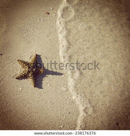 instagram effect of starfish on beach - stock photo