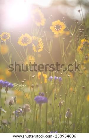 Instagram filter effect flower image of bright sunshine - stock photo