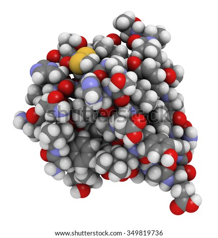 Insulin peptide hormone molecule. Used in treatment of diabetes. Atoms shown as color-coded spheres. Conventional per element coloring. - stock photo