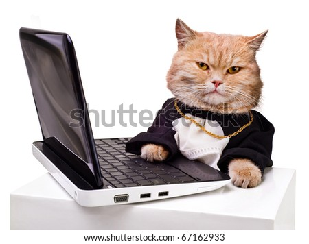 intelligent cat for the laptop.Animal in the academic robes on a white background. - stock photo