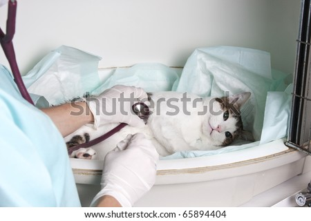 Intensive pet care unit