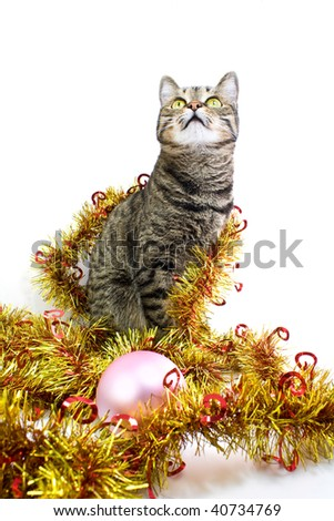 Interested cat in a tinsel look up - stock photo