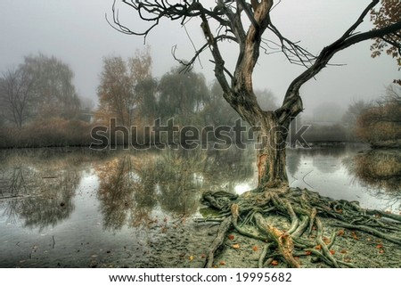 Interesting Tree and Pond in Misty Fog - stock photo