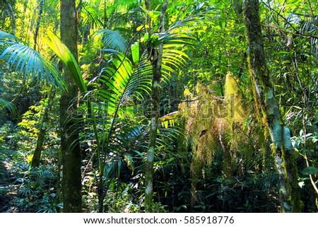 biodiversity rainforest - photo #27