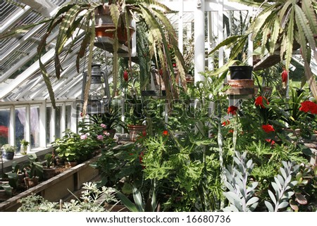 Interior of small greenhouse with plants and flowers - stock photo
