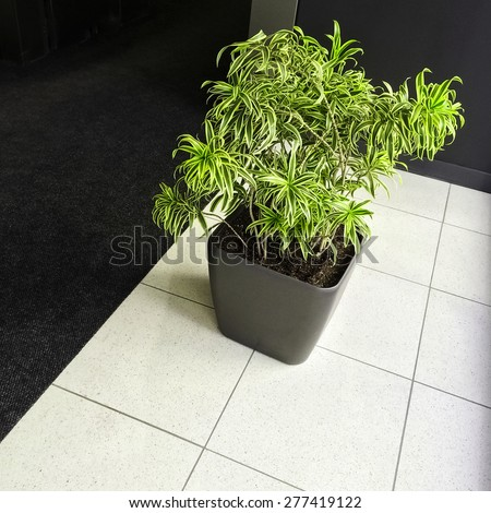 Interior with green plant on black and white floor. - stock photo
