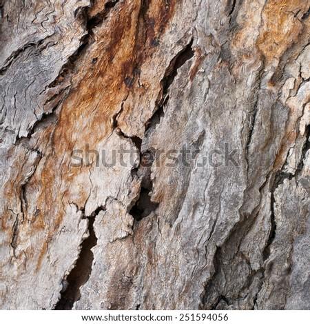 intricate bark pattern on an australian gum tree - stock photo