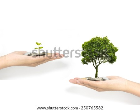 investment with growth concept of plant - stock photo