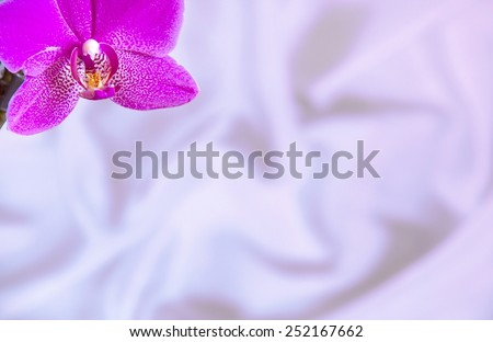 Invitation Card Template with Orchid Flower on light silk  background with copyspace  - stock photo