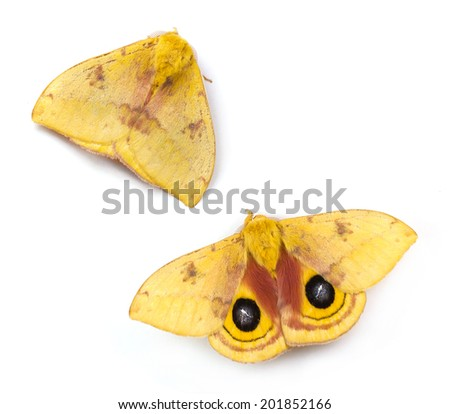 Io Moth (Automeris io) on a white background - stock photo
