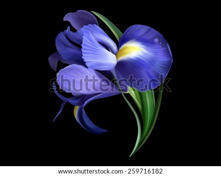 iris flower painted on black